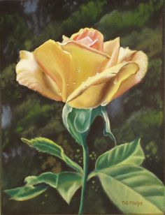Oil Painting peach rose with lovely dew drops fresh from by delmus, sold