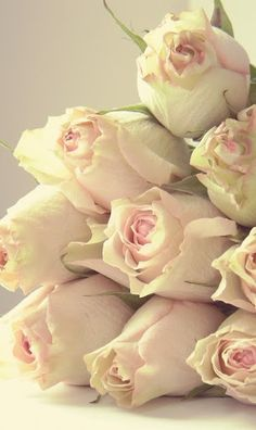 a bunch of pale pink roses Love Rose, My Flower, Pretty Flowers, Pretty In Pink, White Roses, Pink Roses, Pink Flowers, Blush Roses, Pale Pink