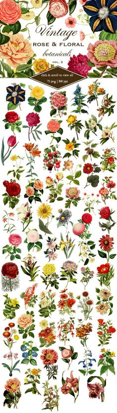 This is a carefully curated collection of 75 vintage rose and floral botanical graphics. Each flower is an individual png file with a transparent background, so they are easily layered. Perfect for ca