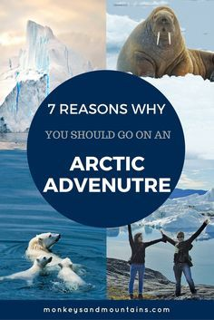 Join me for an Arctic Adventure this summer that will take us to Greenland and Canada. You've got a great chance of seeing seals, whales, walruses and polar bears. Plus, you'll visit the UNESCO World Heritage Site of the Ilulissat Icefjord in Greenland, and have incredible interactions with the Inuit people.