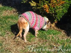Hartwood Roses: Pattern For Winnie's Tiny Knitted Dog Sweater