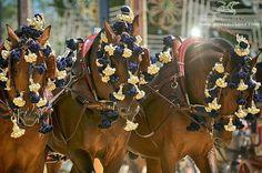 Feria del caballo.  Jerez de la Frontera.