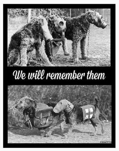 Pin by Jennie Lamb on War dogs, Lest we forget ♡♡♡ Dog Soldiers, Canadian Soldiers, Work With Animals, Animals And Pets, Trauma, Ww1 Art, Ww1 History, Purple Poppies, War Dogs