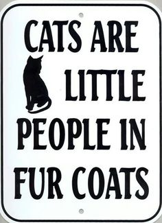 Cats are little people in fur coats. They sure think they are :) I Love Cats, Big Cats, Cool Cats, Cats And Kittens, Crazy Cat Lady, Crazy Cats, Jiff Pom, Chesire Cat, Gatos Cats