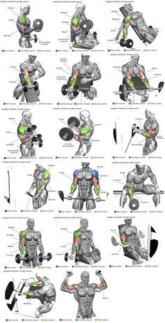 Biceps e Braquial http://www.weightlossjumpstars.com/best-workout-for-your-blood-type/