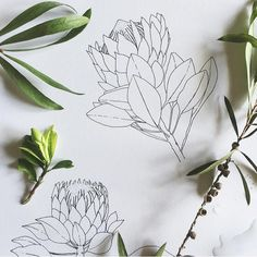 It's been such a busy few days settling my girl into a new school on the other side of the world 😳 then hosting a sleepover where zero… Tattoo Illustration, Plant Illustration, Illustration Sketches, Botanical Illustration, Protea Art, Protea Flower, Flowers, Botanical Line Drawing, Elements And Principles