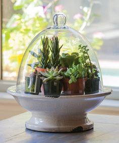 Gifted Living 843861 Pedestal Base Terrarium with Glass Top Air Plants, Garden Plants, Indoor Plants, Evergreen Flags, Cactus, Deco Table, Glass Domes, Houseplants, Container Gardening