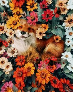karencantuq: i hope you find whatever your heart needs. my absolute favorite fox Cute Creatures, Beautiful Creatures, Animals Beautiful, Animals And Pets, Funny Animals, Cute Fox, Animal Wallpaper, Cute Little Animals, Cute Wallpapers
