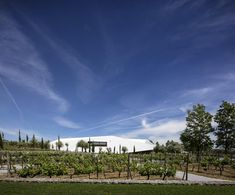 Are you loking for tips on wine hotels, best cellars and wine route in Alentejo? If yes, read this artice to know all about Alentejo wine. The Wine Club, Sweet White Wine, Wine Offers, Wine Tasting Experience, Famous Wines, Wine Tourism, Types Of Wine, Wine Making, Countryside