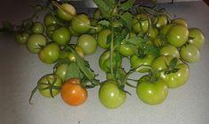veggie patch vegetables garden tomatoes harvest