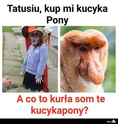 BESTY.pl - Kucyk Pony Stupid Memes, Funny Memes, Meme Lord, More Than Words, Good Mood, Best Memes, Movie Stars, Haha, Pictures