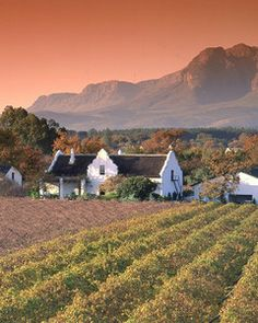 Goal: Weekend trip to Cape Town. Goal: To stay at a wine farm. Stellenbosch is in the winelands of Cape Town South Africa and is so beautiful. South Africa Safari, Cape Town South Africa, South African Wine, Cape Dutch, Namibia, Le Cap, Overseas Travel, In Vino Veritas, Travel And Leisure