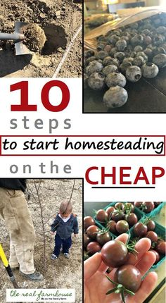 10 steps to start homesteading on the cheap. Where to start when you want to homestead