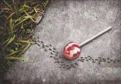 Ants and aspartamo.  Yes, I always say that ants aren'n sttupids