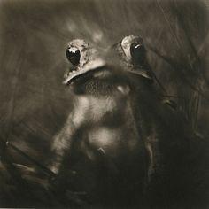 toad, platinum/palladium print by David Johndrow, 2005