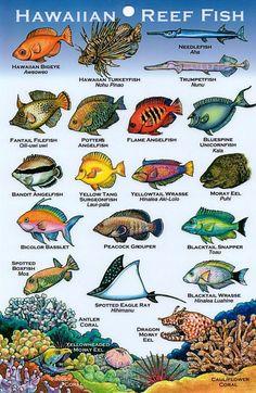 Hawaiian Reef Fish and corals Hawaii Life, Aloha Hawaii, Hawaii Vacation, Hawaii Travel, Fish Chart, Art Handouts, Hawaii Homes, Marine Biology, Hawaiian Islands