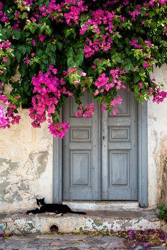 Cats of Hydra, Greece