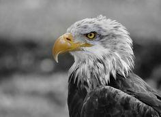 painted eagle by gorka orexa - Photo 135014051 - 500px