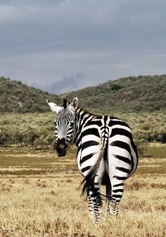 The 80 Best Kenya Images On Pinterest Kenya Travel Nairobi And Africa