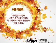#9월추석 (한가위)와 #가을이벤트  추석(한가위)와 낙엽이 떨어지는 가을도 국내 최저가 고양이용품샵과 함께하세요.