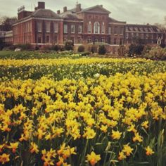 A sea of daffodils signal the start of Spring outside Kensington Palace. #happyeaster