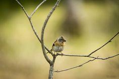 A little tweety bird by Frode Abrahamsen on 500px