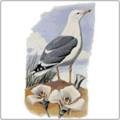 State Birds and Flowers in Counted Cross Stitch