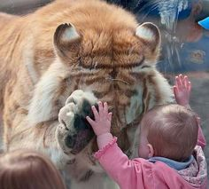 children and their pets - be prepared for some serious cuteness (p.s. - what kid owns a tiger??!)