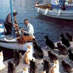 Kitties in a Greek port, patiently waiting for treats from the fishermen