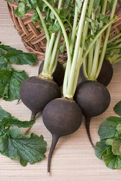 Black Radish is a great ingredient to any detox diet! Find out the most beneficial ingredients for detoxing here. Easy Vegetables To Grow, Fruits And Vegetables, Watermelon Radish, Fall Plants, Autumn Garden, Edible Garden, Beets, Herbalism, Exotic
