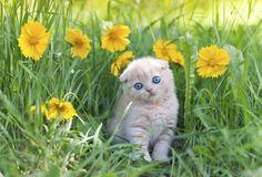 Freshly tilled dirt is a tempting litter box for an uninvited feline.