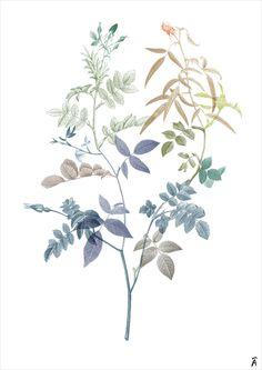 Landscape Illustration, Botanical Illustration, Illustration Art, Botanical Flowers, Botanical Prints, Watercolor Flowers, Watercolor Paintings, Floral Drawing, Plant Art