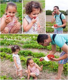 Aardbeienland 2016 - Past & Present fotografie  strawberries theme parc - Limburg - Netherlands