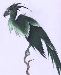 Augurey II by *verreaux (@deviantART) Irish phoenix of Harry Potter world