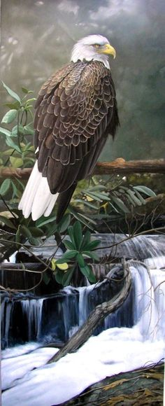 Bald eagle painting by Bob Travers . Eagle Images, Eagle Pictures, Bird Pictures, Pretty Birds, Beautiful Birds, Animals Beautiful, Eagles Tattoo, Philippine Eagle, Eagle Painting