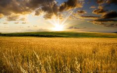 Love this! Like the wheat fields in Dayton though I don't know where this was taken.