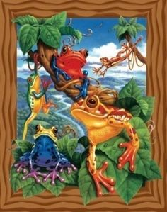 Frogs of various kinds picture