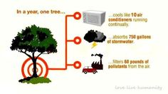 Three key benefits of urban trees in one simple graphic, from Earth Gauge. Arbour Day, One Tree, Green Life, Worlds Of Fun, Science And Nature, Trees To Plant, Tree Planting, The Help, Fun Facts