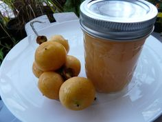 How To Make Palm Fruit Jelly - Pindo Palm, DIY, Self Sufficient Jelly Ma...