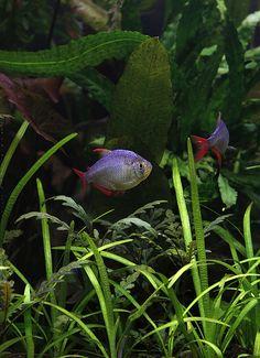 redfin1 | Flickr - Photo Sharing!