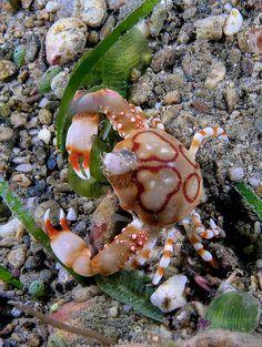 Animales marino