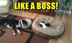 LIKE A BOSS!  | Follow us for more fun pet videos and photos @gwylio0148