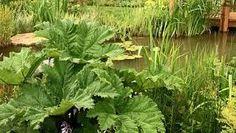 Image result for natural bog garden