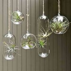 air plants - Bing Images