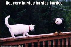 heeeere burdee