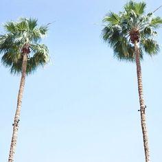 Our favourite kind of tree.  follow @weareinyourarms www.inyourarms.com.au