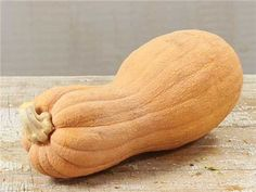 """Butternut Rogosa Violina """"Gioia"""" Squash:100 days (C. moschata) An Italian Butternut-type squash, these have a violin shape and wrinkled tan skin. The flesh is deep orange and sweet, perfect for desserts, roasting, stuffing and baking. Great for storage"""