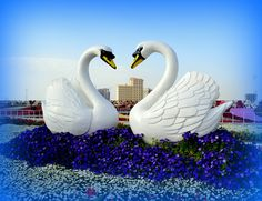 Marvelous #3D swans by Styro Limited. #Styro #UAE #swans