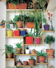'Nos gusta el brillo de las hojas verdes y los maceteros de colores de nuestro jardincito: le dan un toque de color muy alegre'.