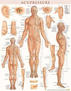 Acupressure Points Chart, Acupressure Treatment, Acupressure Therapy, Medical Anatomy, Dental Anatomy, Chinese Medicine, Chiropractic, Alternative Medicine, Massage Therapy